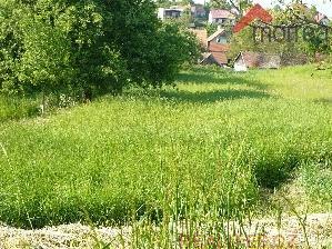 Prodej Pozemek Roštín