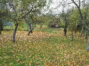 Prodej Pozemek Řečkovice